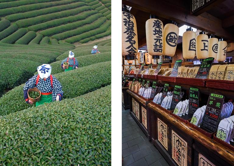 Left: Women picking tea leaves, Uji, Japan | Right: Uji tea shop