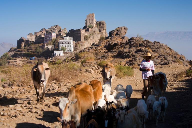 Shepherds with cattle near the village of Al Ayn