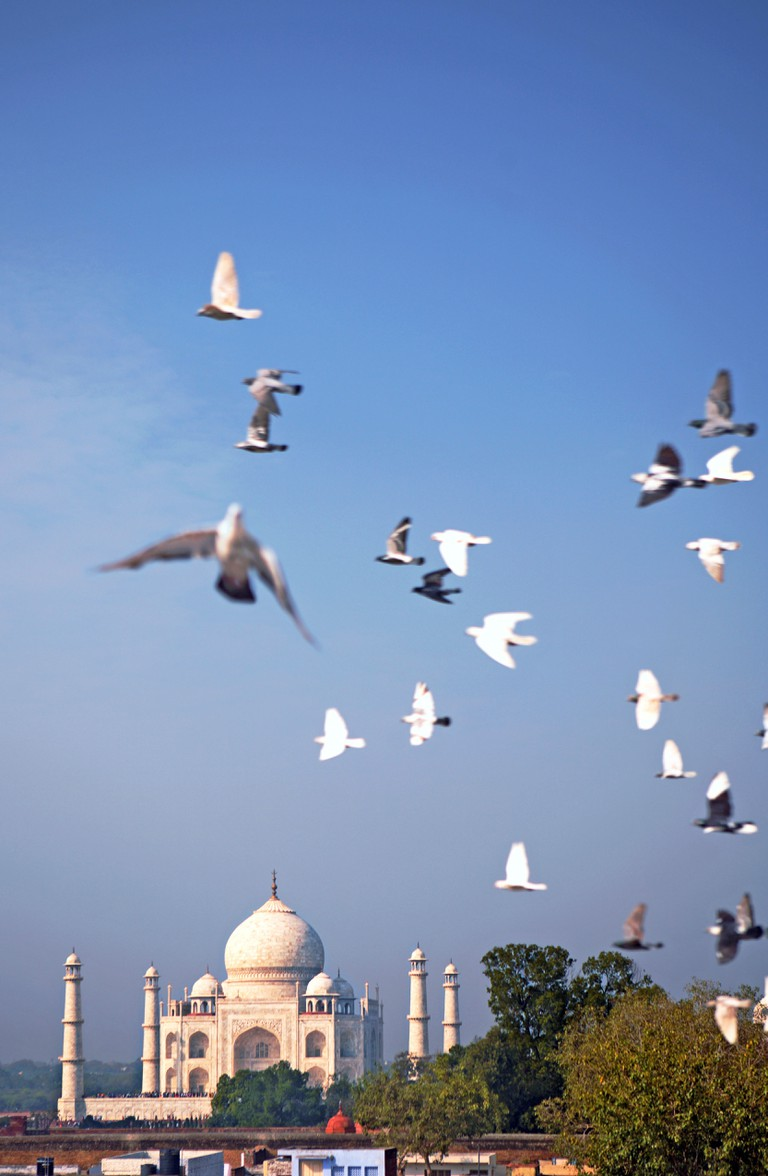 View of flying pigeons and the Taj Mahal, Taj Ganj.