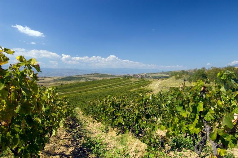 Vineyards, Pirin Mountains, Bulgaria