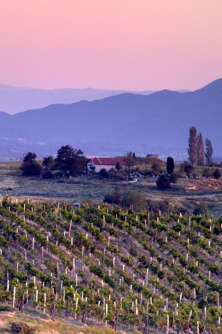Vineyards and pink sky in Bulgaria