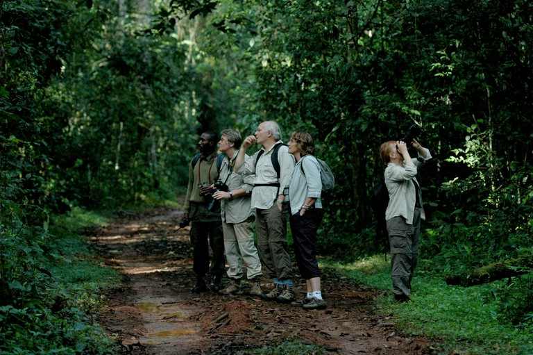 Tourists track chimpanzees in Kibale national park