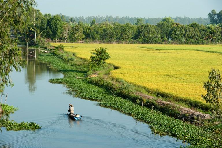 Canoe on a river between the rice paddies, Mekong Delta, Chau Doc, Vietnam