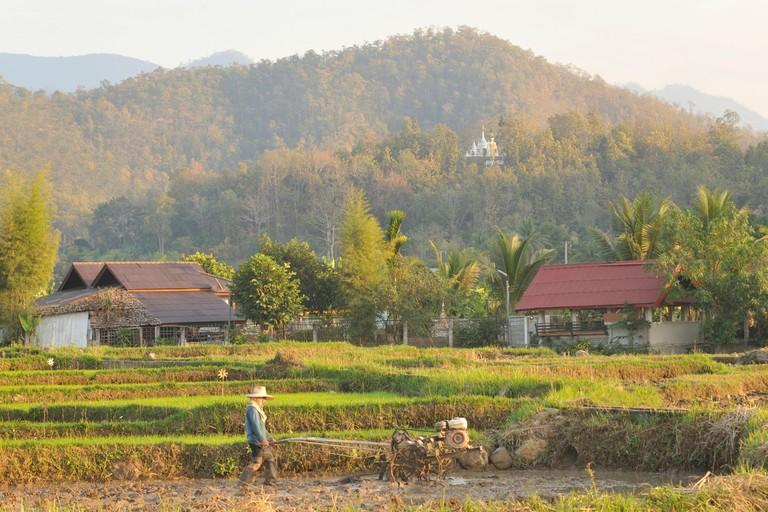 man plowing rice field, Mae Hong Son, Thailand