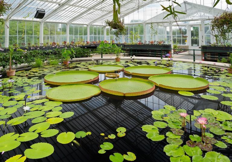 Kew royal botanical gardens, Waterlily house - London, UK, Europe