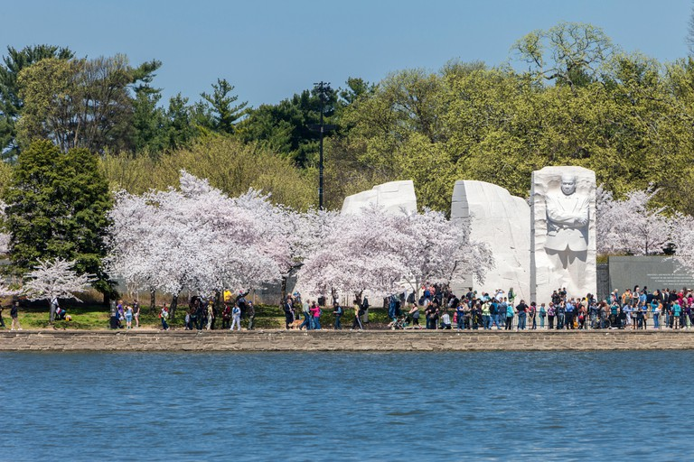 Washington, D.C., Cherry Blossoms and Martin Luther King, Jr. Memorial.