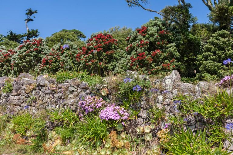 Tresco Abbey Gardens, Isles of Scilly.