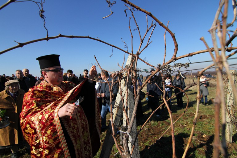 Bulgarian Orthodox priest pours a vine with a red wine in national traditional clothes as part of the wine feast called St.Trifon day in Bulgaria