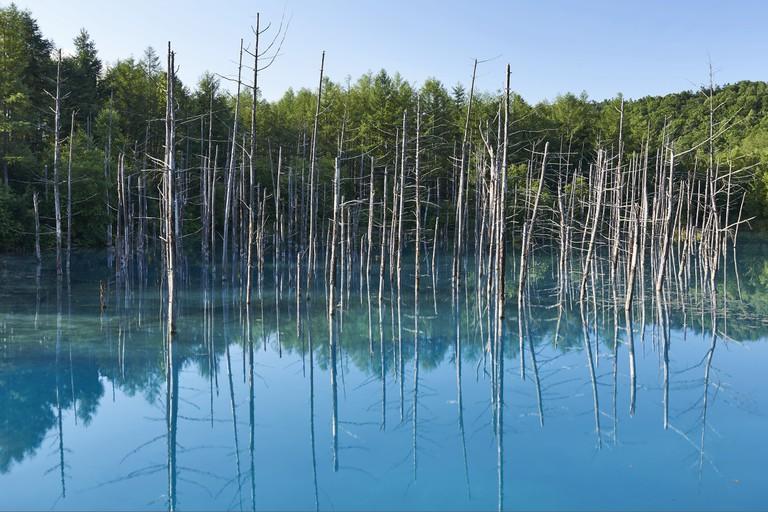 Blue Pond in Biei, Hokkaido.