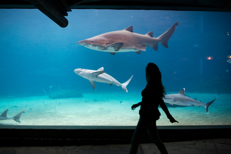 Sharks in an aquarium at uShaka Marine World.