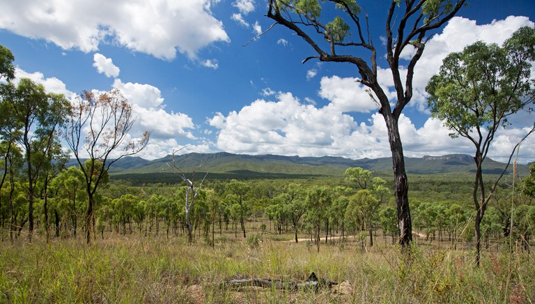 Panoramic landscape of eucalypt woodlands at Homevale National Park