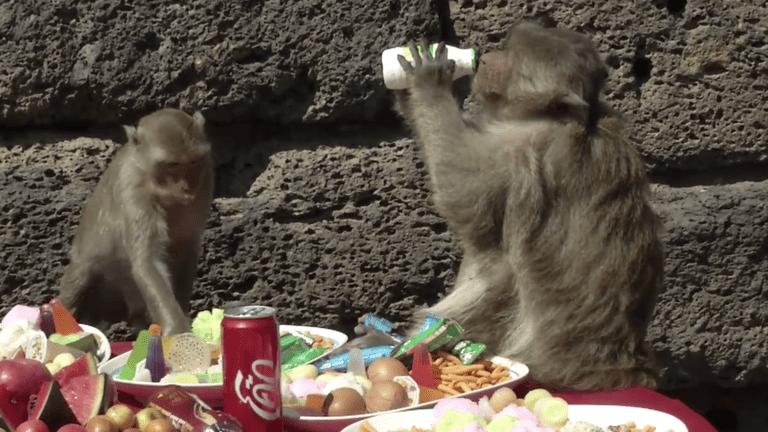 Monkey Buffet 4