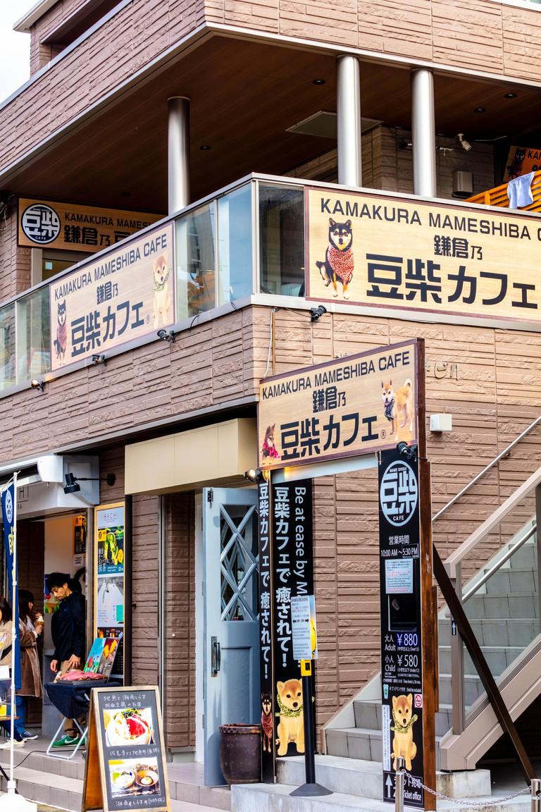 Kamakura Mameshiba dog cafe
