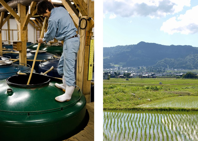 Left: Sake being made in a brewery in Japan | Right: Rice fields in Niigata, Japan.