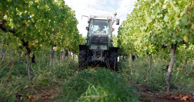 Tractor in Villa Maria vineyard