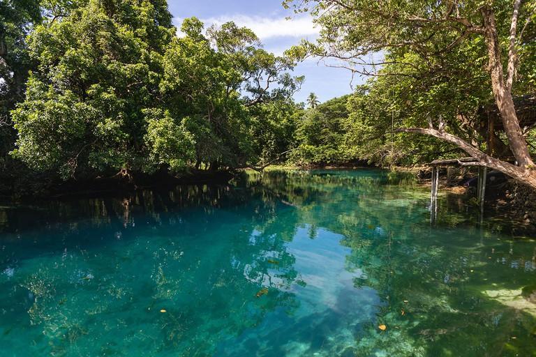 lush rainforest around freshwater blue lagoon Matevulu blue hole Espirito Santo island Vanuatu Oceania