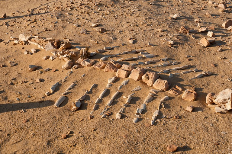 Whale skeleton exposed in sand at Wadi El Hitan, Valley of the Fossils, Egypt