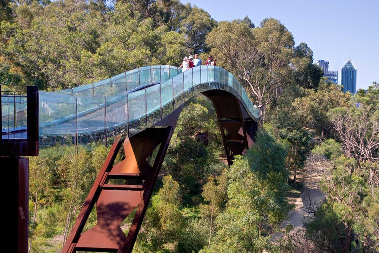 Tree top walk in King's Park Perth Western Australia with a glimpse of the city beyond