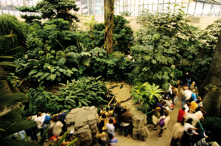 Canada, Quebec, Montreal, the Biodome, the tropical forest