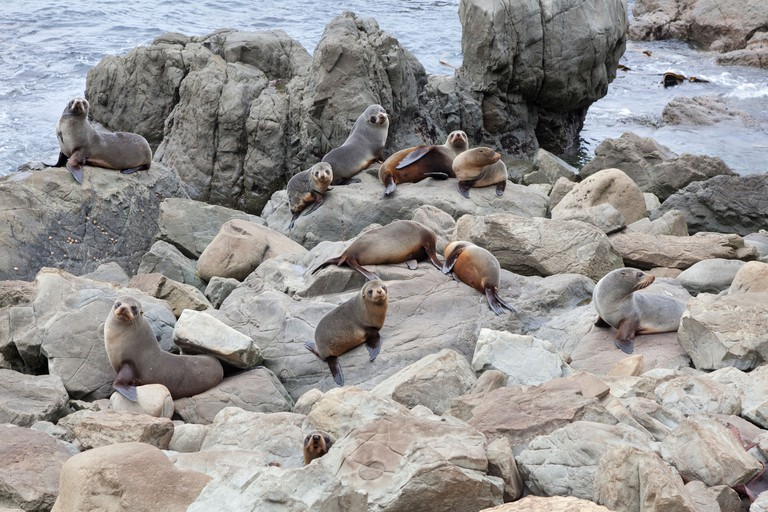 Fur seals on the cliffs near Kaikoura