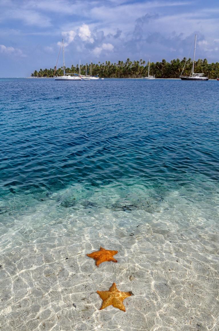 Starfish (Asteroidea) in the crystal clear water, tropical island of Cayos Chichime, San Blas Islands, Panama