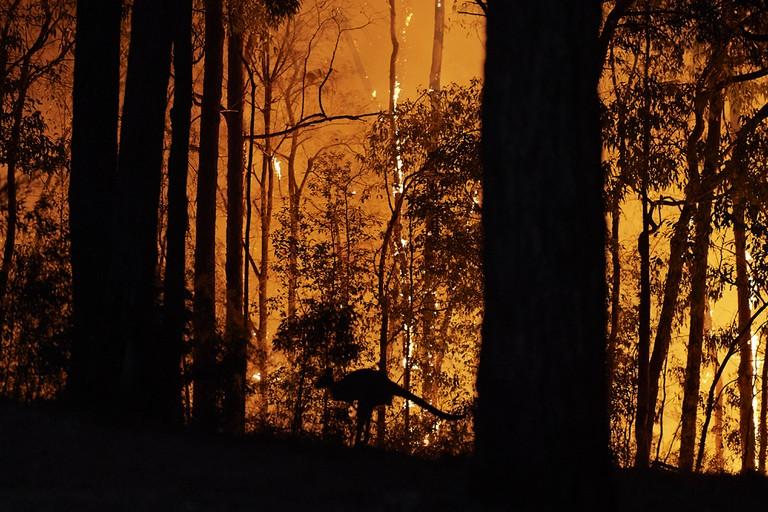 A kangaroo flees from bushfires