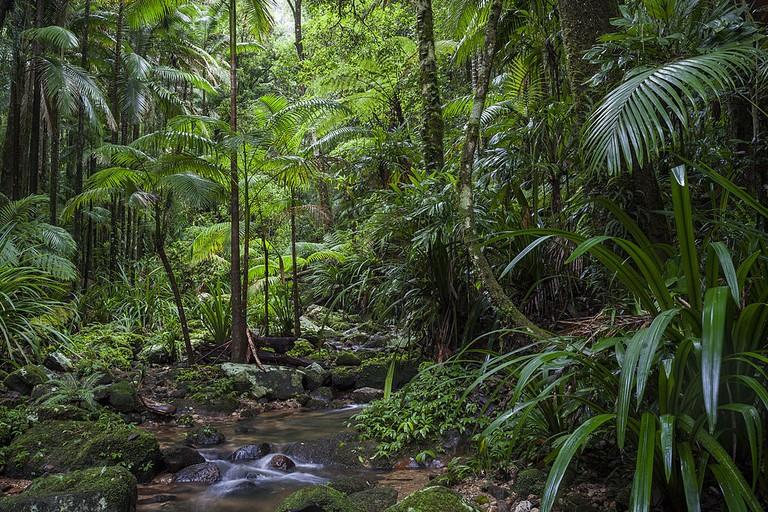 Bat Cave Creek, New South Wales, Australia