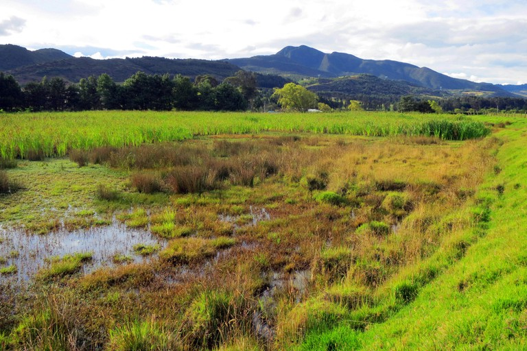 Bogotawaterral leefgebied; Bogota Rail habitat