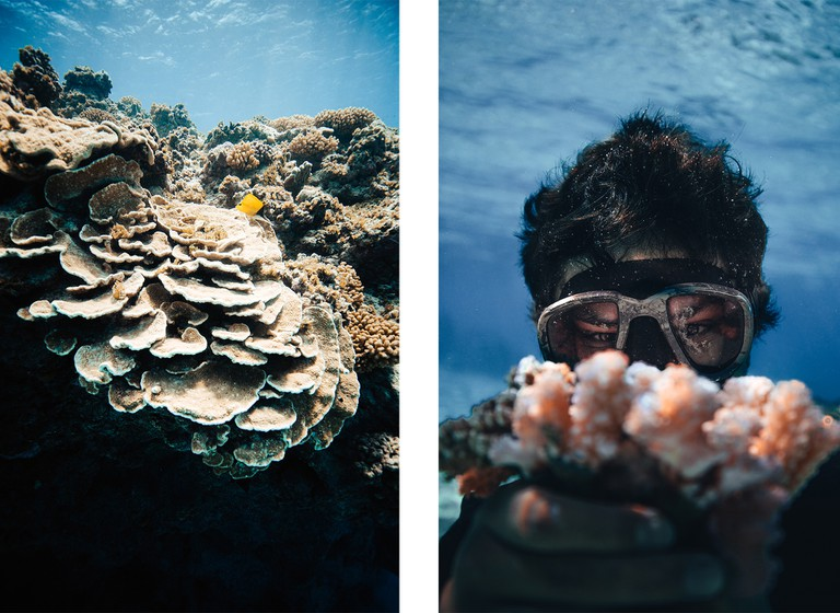 Left: Coral takes many different forms; Healthy Montipora Foliosa / Right: Monitoring the growth of the fragments