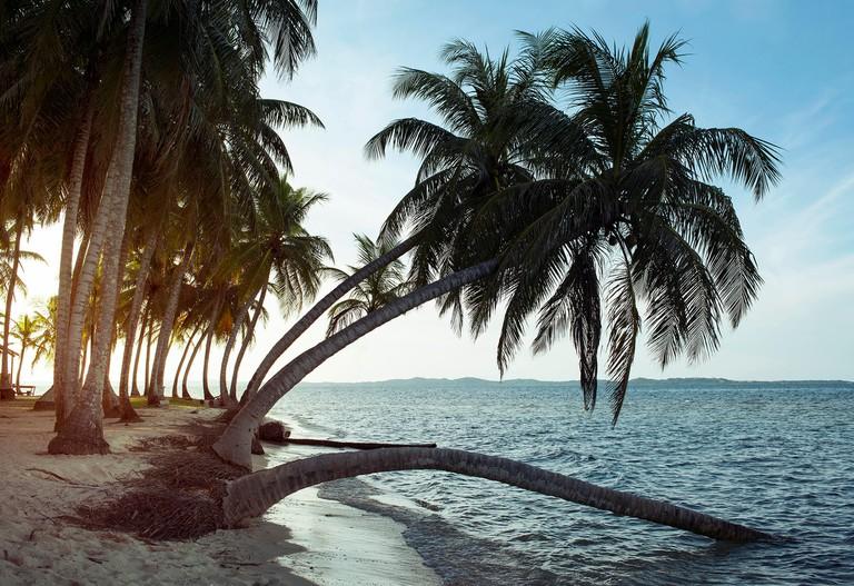 Bending palm trees on the tiny Icodub islet. San Blas Islands, Panama. Oct 2018