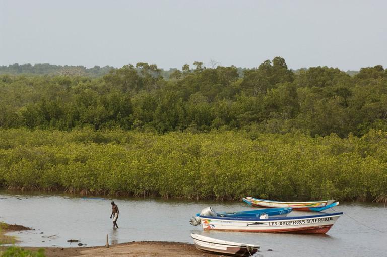 pirogues between the mangroves in the Sine-Saloum Delta, Toubakouta, Senegal