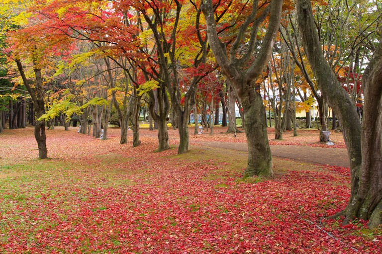 Miharashi Park Tree Footpath