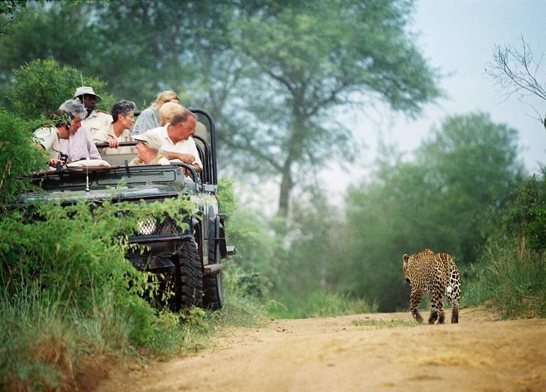 Safari tourists watch leopard Panthera pardus  from vehicle Mala mala Kruger South Africa