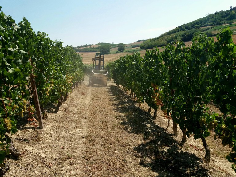 Cantina d Casorzo_Lifestyle_Winebuyers