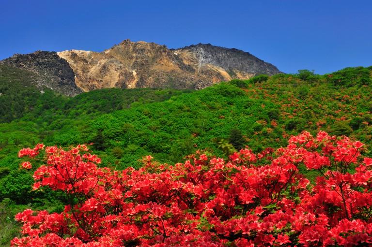 Mount Esan and Azalea, Hakodate, Hokkaido, Japan
