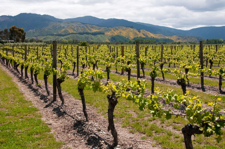 New Zealand South Island Marlborough,  winery touring tasting at Wairau Vineyards of Sauvignon Blanc Pinot Noir wine
