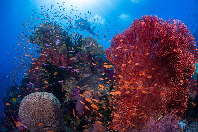 Fijian reef scene.