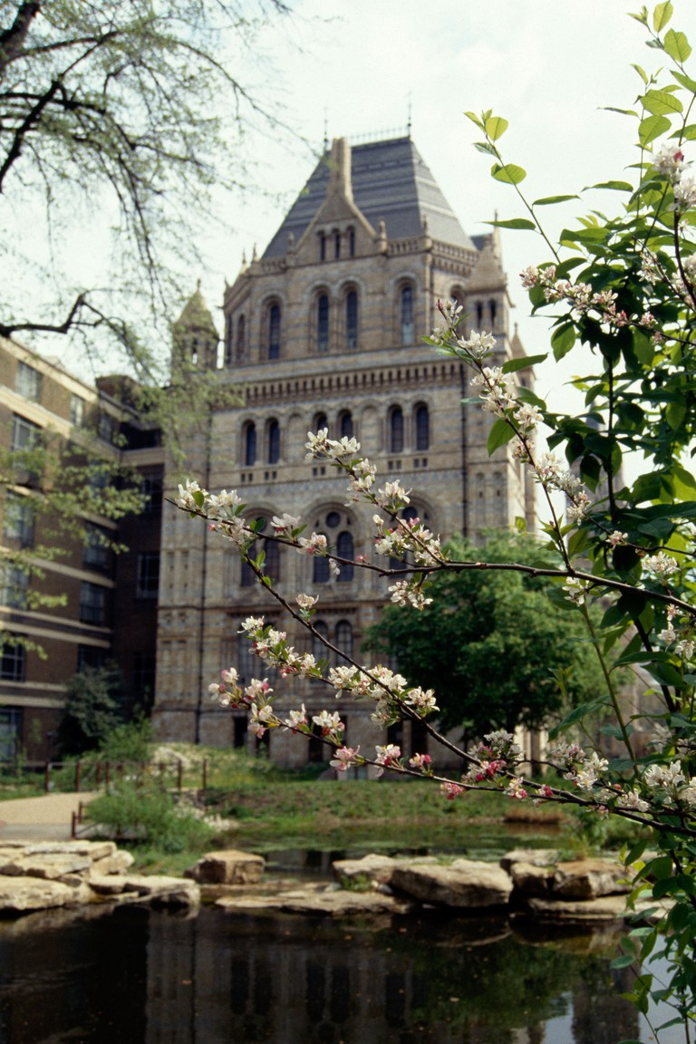 Wildlife Garden, the Natural History Museum