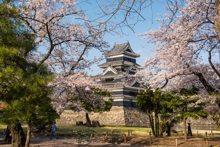 Cherry blossoms at Matsumoto Castle in Japan.