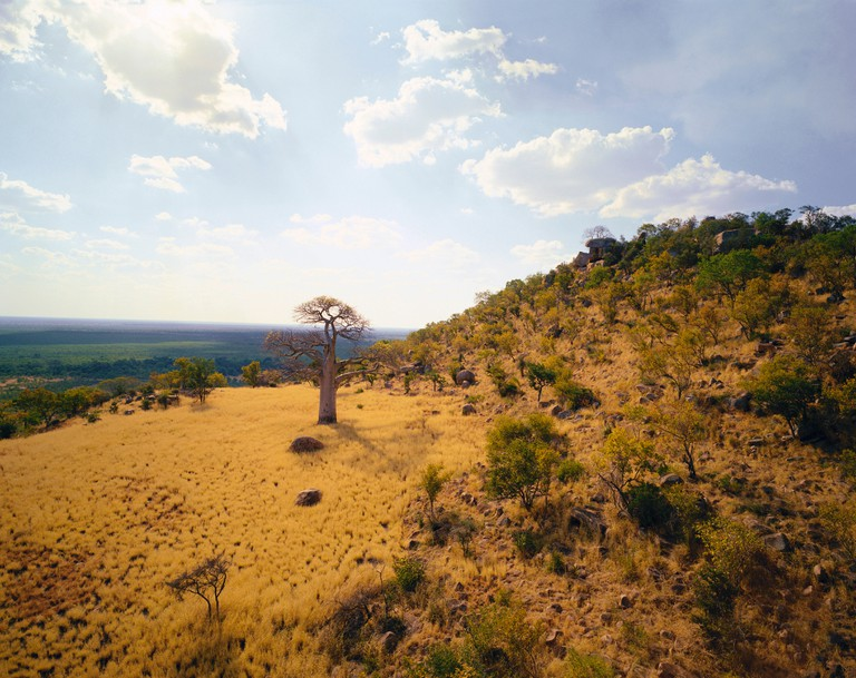 Thulamela Ruins and Baobab Tree Kruger National Park Northern Province, South Africa