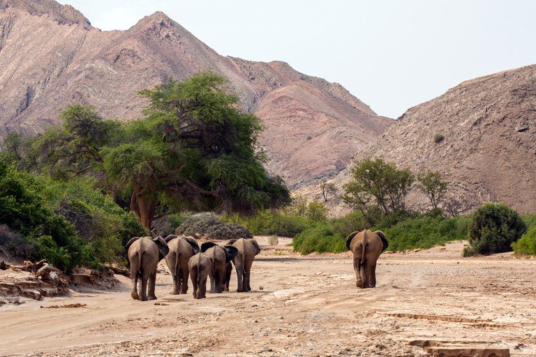 Elephants walking into Kaokoveld, Namibia, Africa