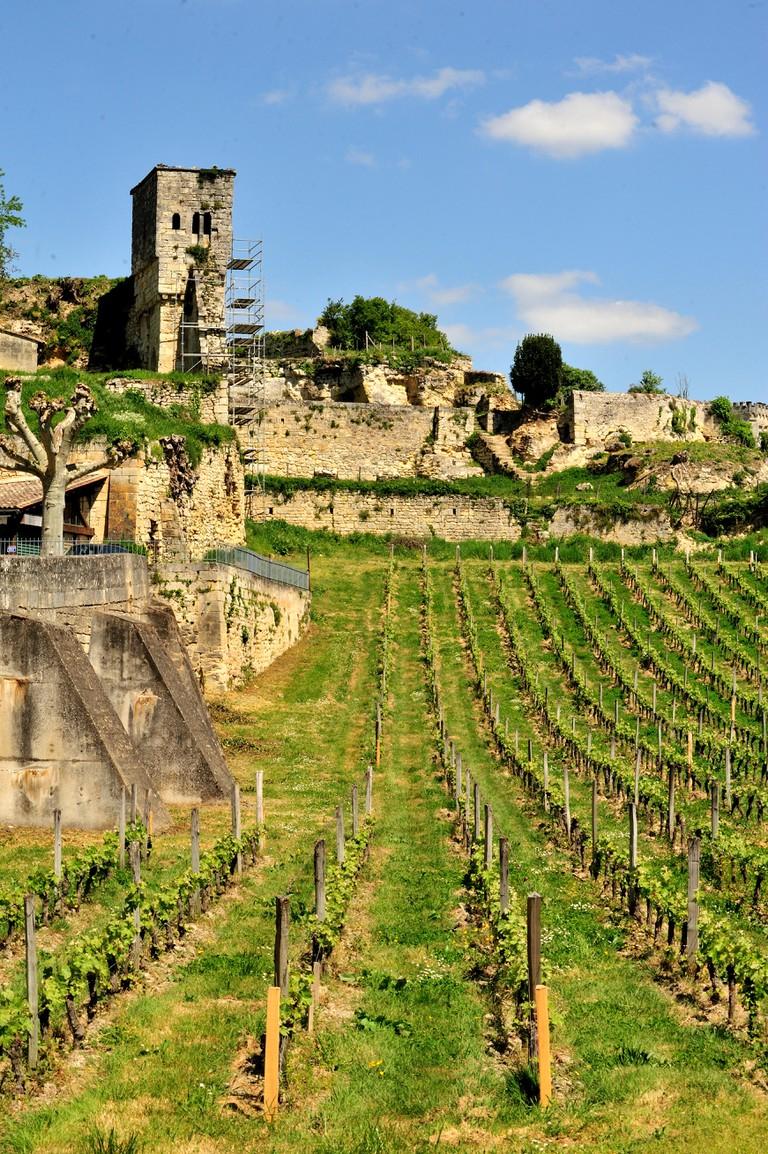 vineyards, St. Emilion, Gironde Department, Aquitaine, France