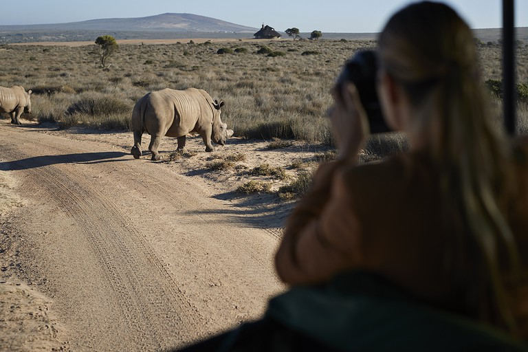 Couple on safari trip with tour guide, taking pictures of rhinos out of 4x4 vehicle