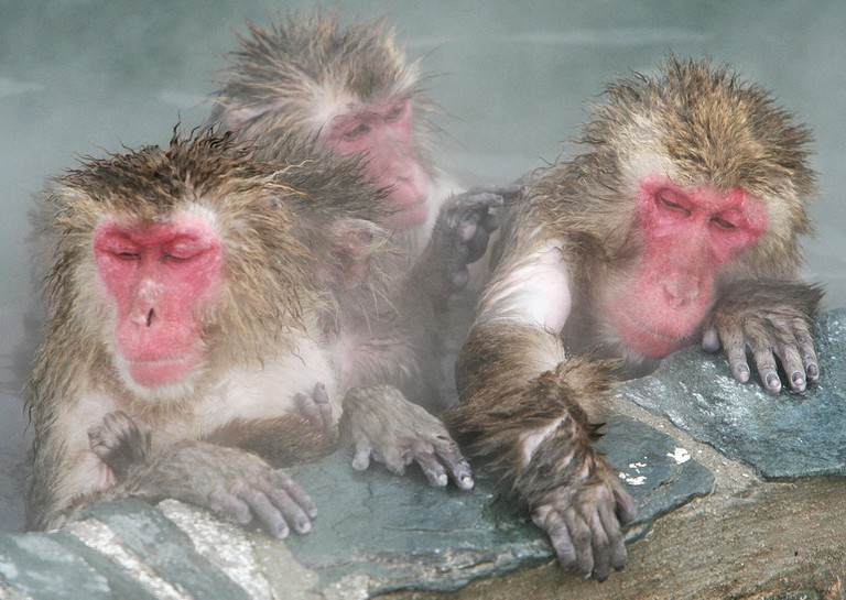 Monkeys warm up in a hot-spring pool at a city-run tropical botanic garden in Hakodate.