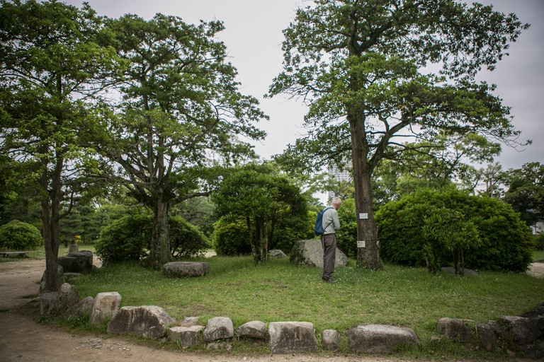 A visitor looks at Kurogane holly trees that were radiated but survived the atomic bomb between Gokoku Shrine and Hiroshima Castle in Hiroshima, Japan.