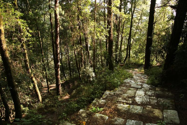 Path or trail leading into the forest or jungle, Shivapuri Nagarjun National park, Kathmandu, Nepal.
