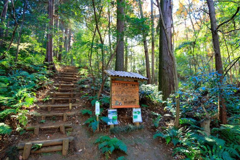Totoro Forest No.1 in Sayama Hills, Saitama