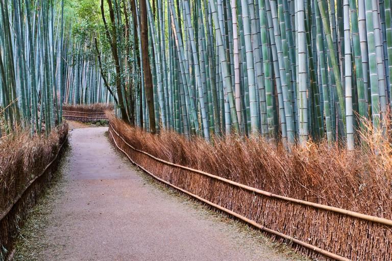 Japan, Honshu island, Kansai region, Kyoto, Arashiyama Sagana, a bamboo forest