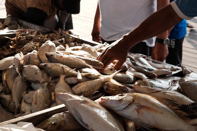 Fish market in Qatar