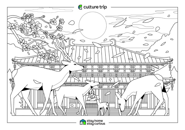 Stay Home - Stay Curious Colouring book-NARA